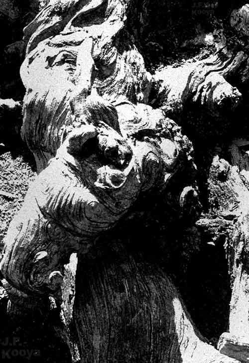 DEAD ROOT(枯れた根の写真) by J.F.Kooya